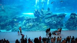 Dubai Mall Aquarium (2)